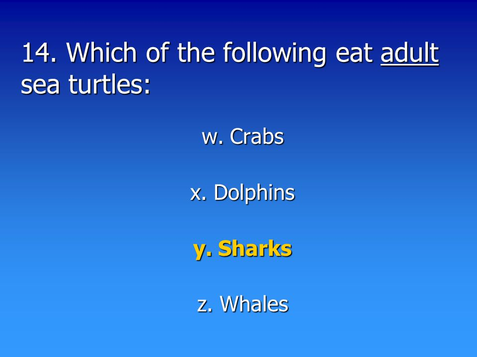 14. Which of the following eat adult sea turtles: w. Crabs x. Dolphins y. Sharks z. Whales
