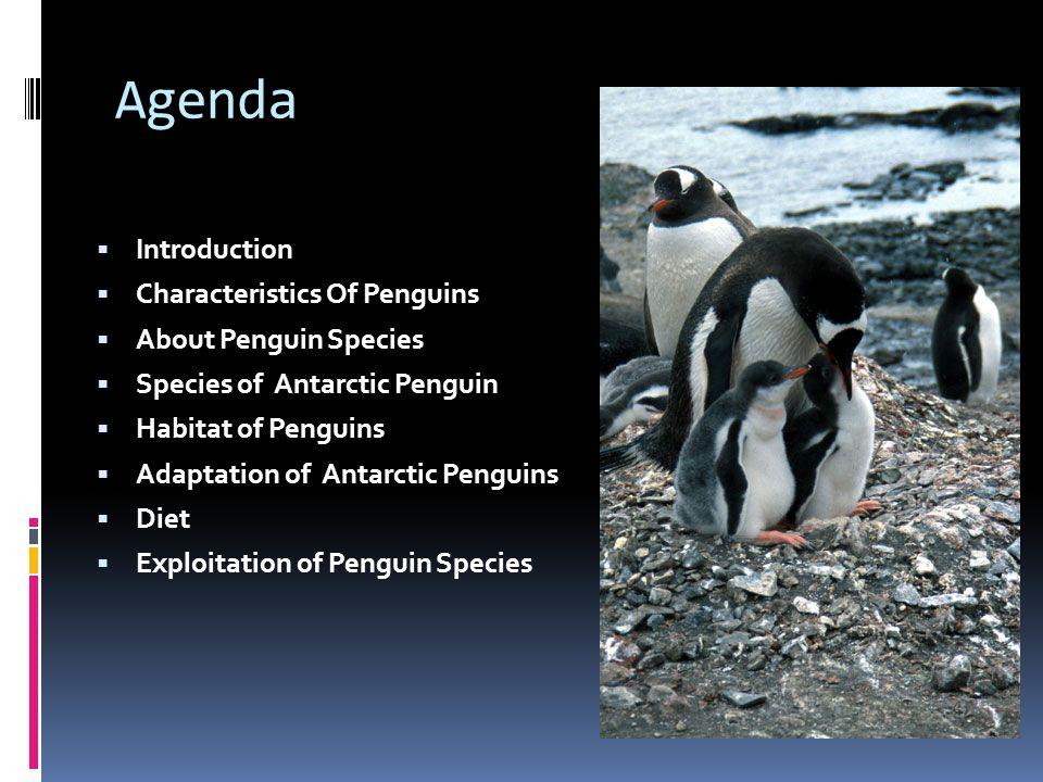 Agenda  Introduction  Characteristics Of Penguins  About Penguin Species  Species of Antarctic Penguin  Habitat of Penguins  Adaptation of Antar