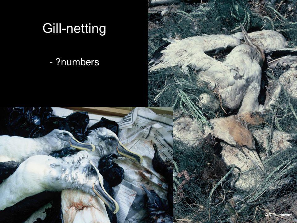 Gill-netting - ?numbers © R Greenaway