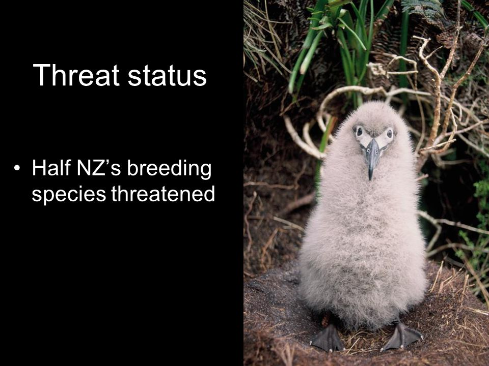 Threat status Half NZ's breeding species threatened