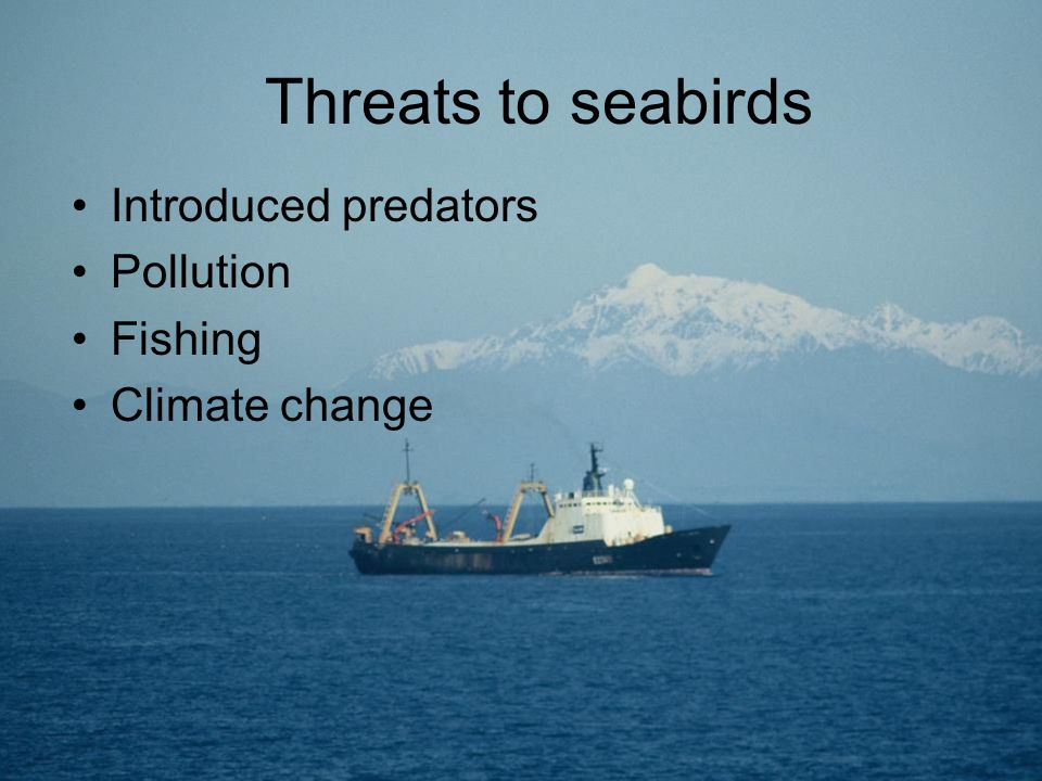 Threats to seabirds Introduced predators Pollution Fishing Climate change