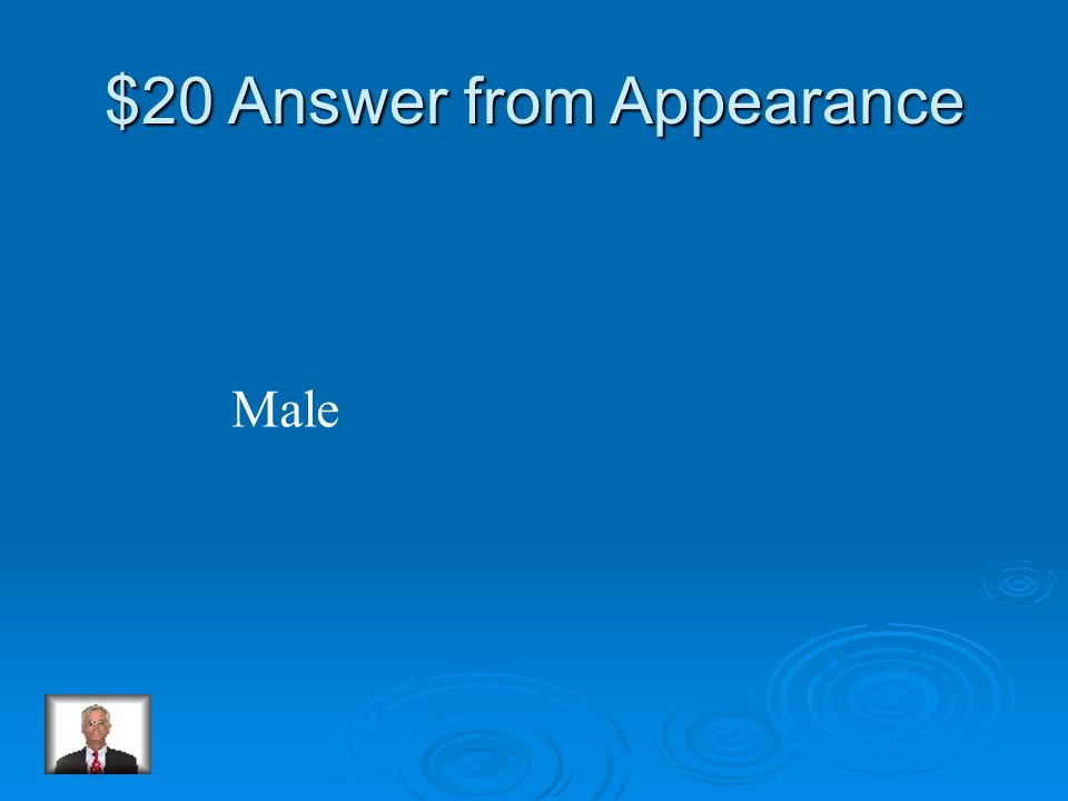 $20 Question from Appearance Which Emperor penguin holds the egg on its feet
