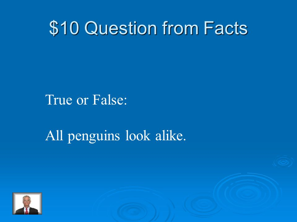 Penguin Jeopardy FactsAppearanceBabiesMovements Habitat Q $10 Q $20 Q $30 Q $40 Q $50 Q $10 Q $20 Q $30 Q $40 Q $50 Final Jeopardy