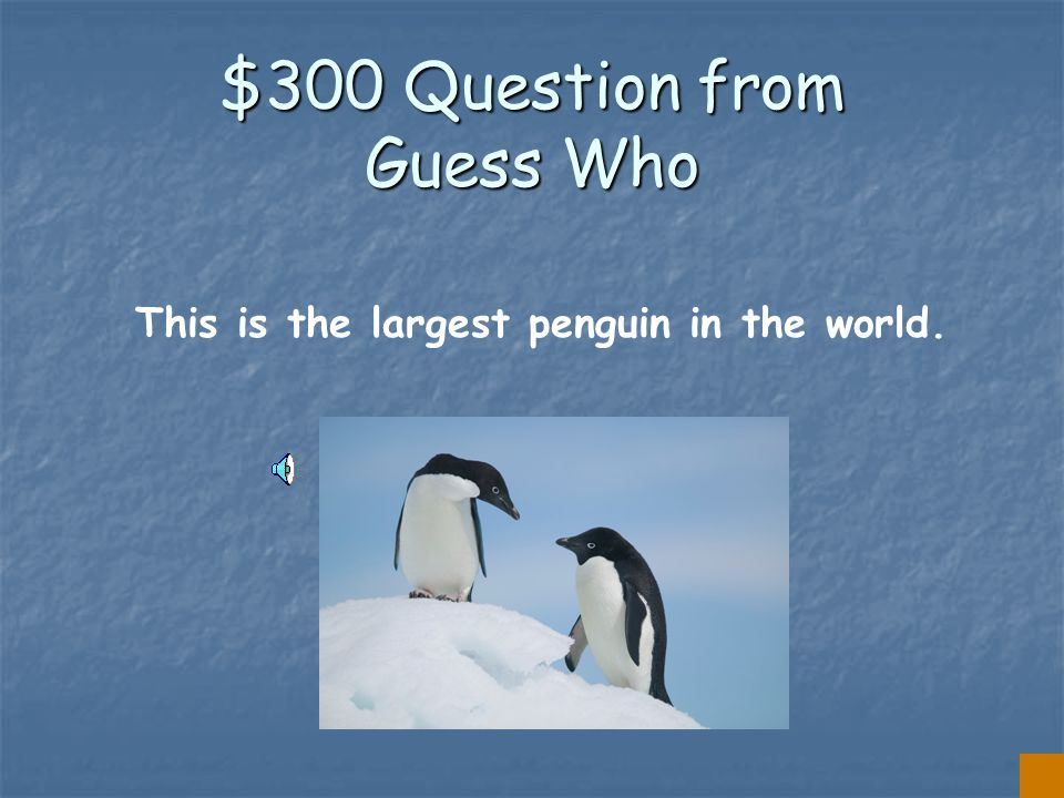 $200 Answer from Guess Who THE ROCKHOPPER PENGUIN