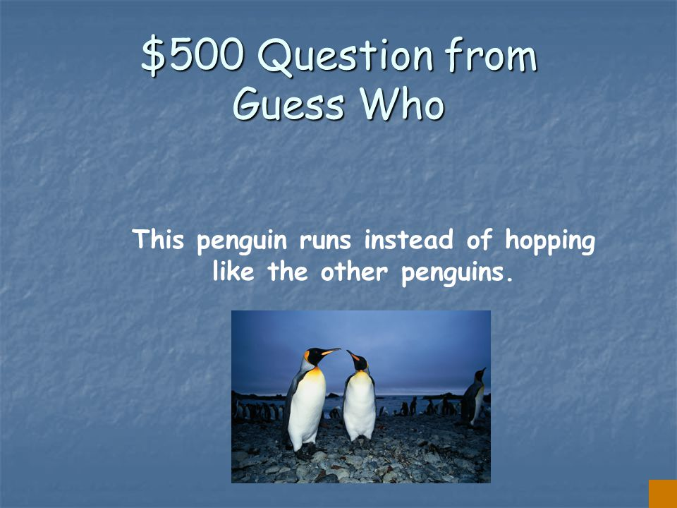 $400 Answer from Guess Who THE FAIRY PENGUIN