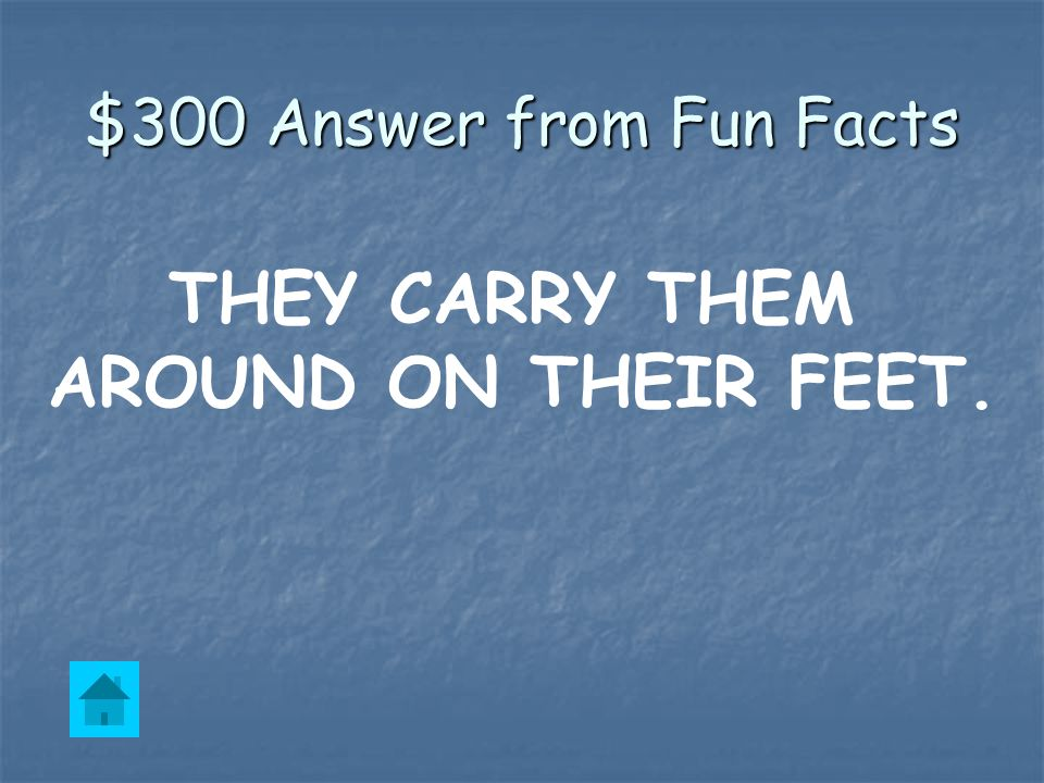 $300 Question from Fun Facts How do father penguins protect the baby eggs