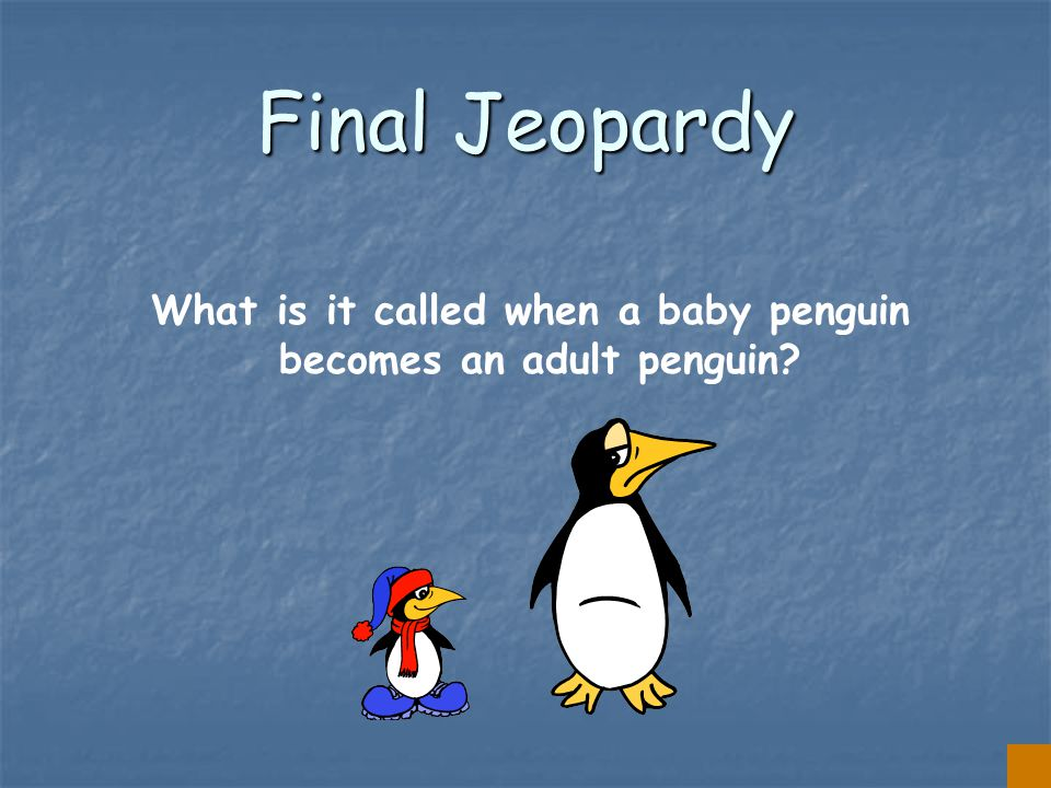 $500 Answer from Penguin Vocabulary FLIPPERS
