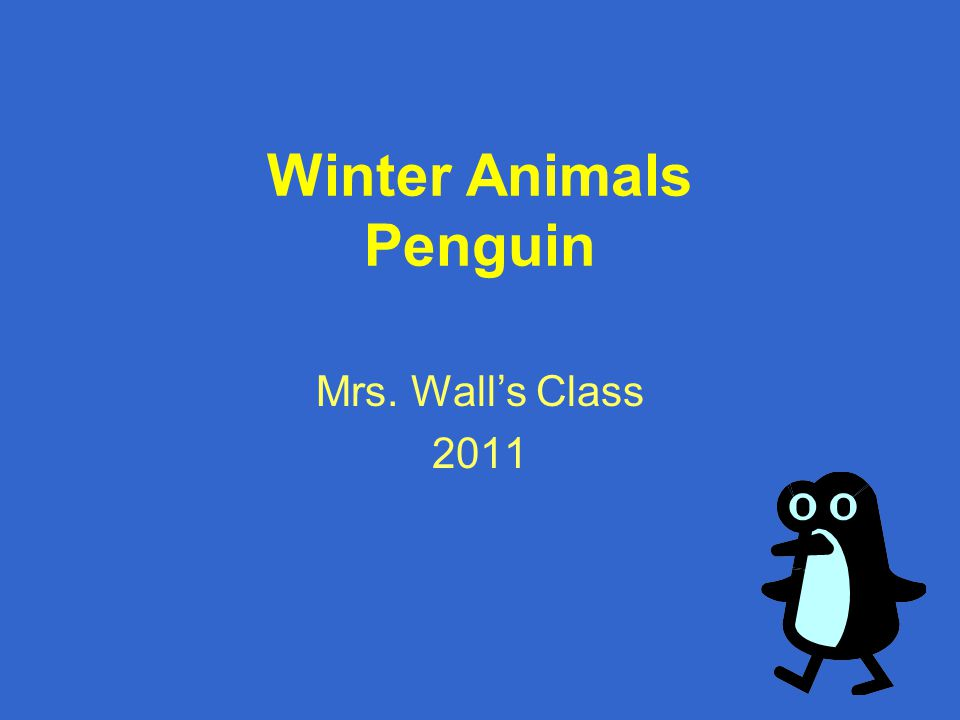 Winter Animals Penguin Mrs. Wall's Class 2011
