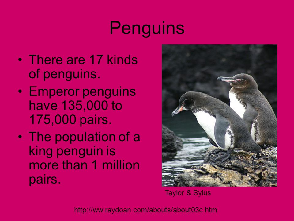 Penguins There are 17 kinds of penguins. Emperor penguins have 135,000 to 175,000 pairs.