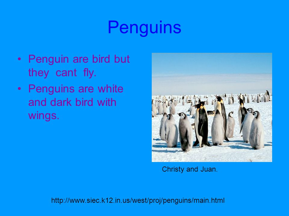 Penguins Penguin are bird but they cant fly. Penguins are white and dark bird with wings.