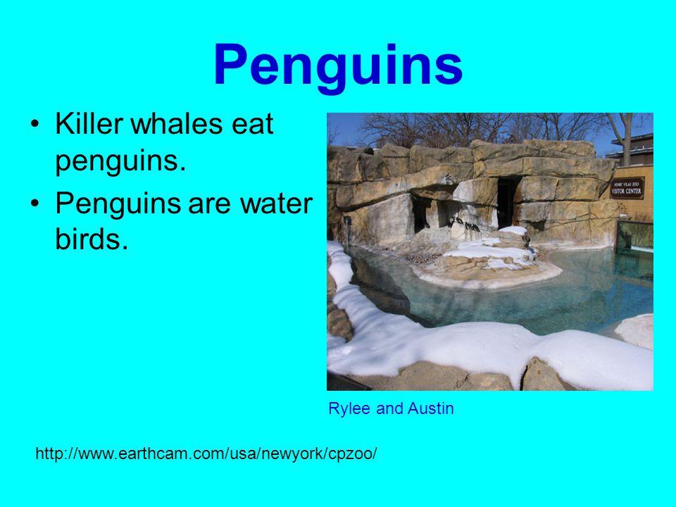 Penguins Killer whales eat penguins. Penguins are water birds.