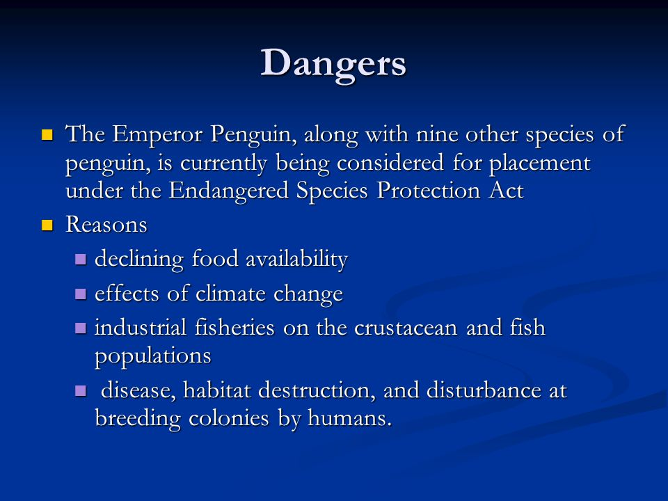 Dangers The Emperor Penguin, along with nine other species of penguin, is currently being considered for placement under the Endangered Species Protection Act The Emperor Penguin, along with nine other species of penguin, is currently being considered for placement under the Endangered Species Protection Act Reasons Reasons declining food availability declining food availability effects of climate change effects of climate change industrial fisheries on the crustacean and fish populations industrial fisheries on the crustacean and fish populations disease, habitat destruction, and disturbance at breeding colonies by humans.