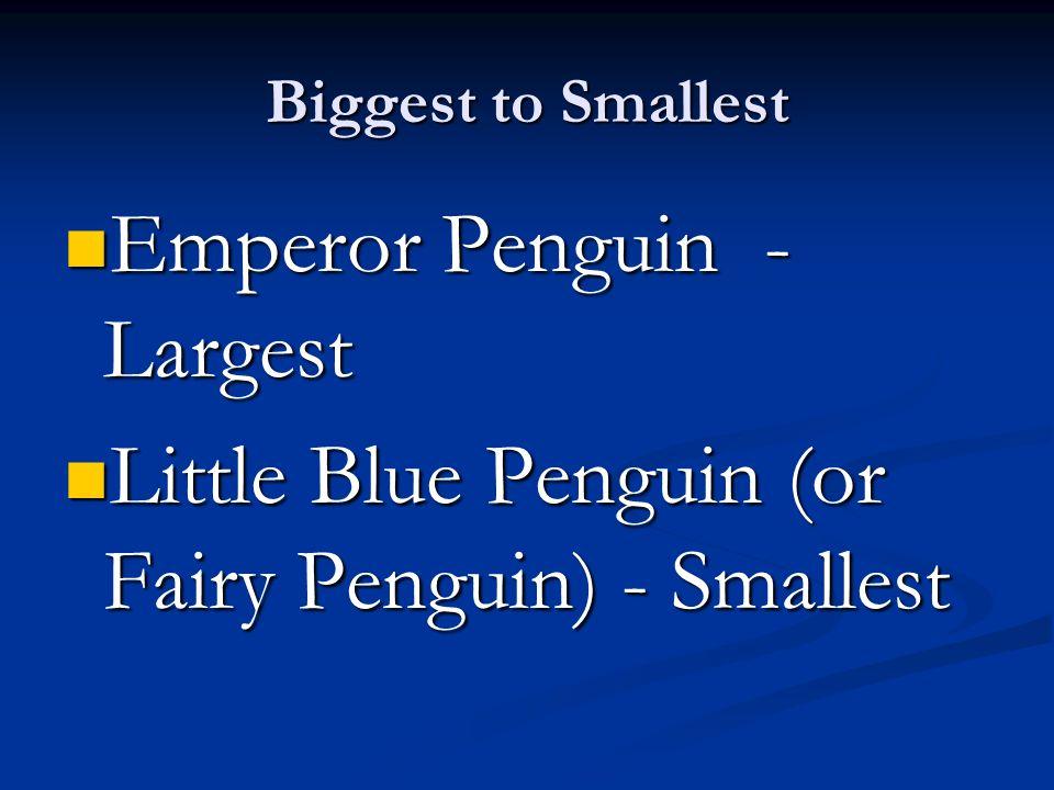 Classification Aptenodytes forsteri – Emperor Penguin Eudyptula minor - Little Blue Penguin