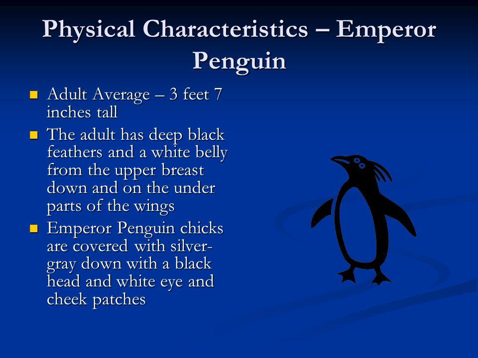 Habitat The Emperor Penguin lives almost exclusively in the Antarctic The Emperor Penguin lives almost exclusively in the Antarctic