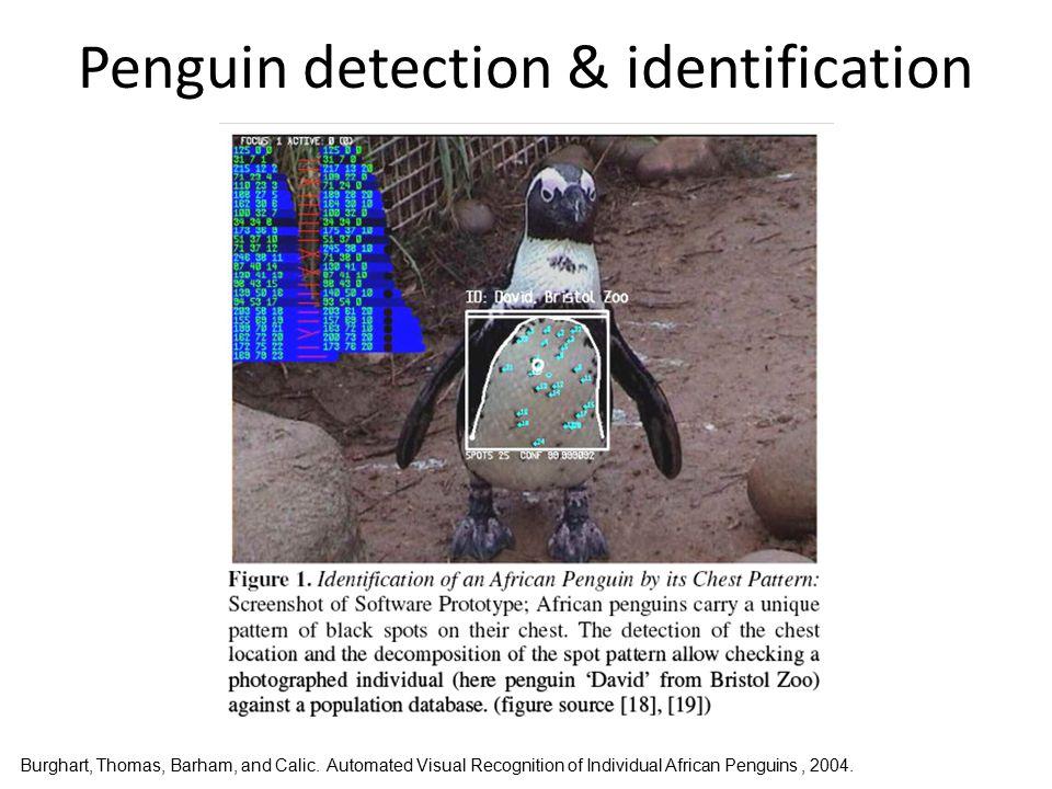Penguin detection & identification Burghart, Thomas, Barham, and Calic.
