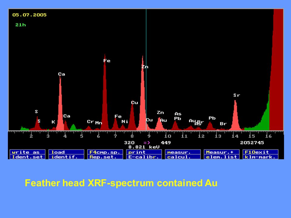 Feather head XRF-spectrum contained Au