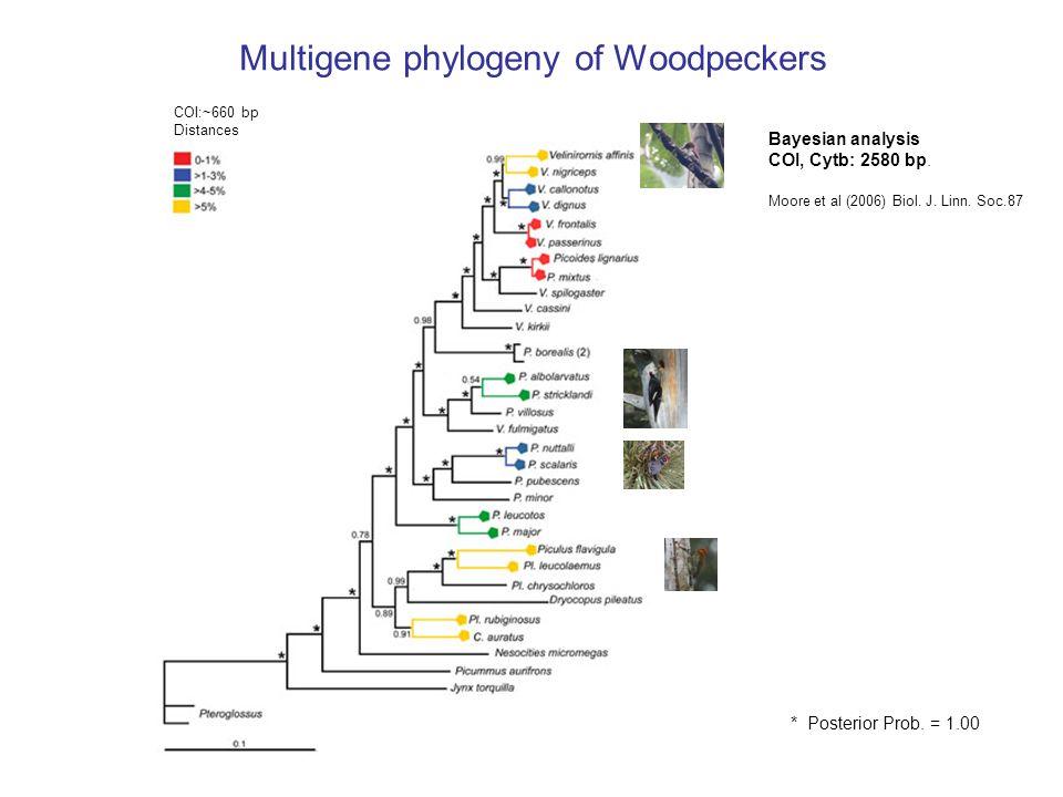 Multigene phylogeny of Woodpeckers Bayesian analysis COI, Cytb: 2580 bp. Moore et al (2006) Biol. J. Linn. Soc.87 * Posterior Prob. = 1.00 COI:~660 bp