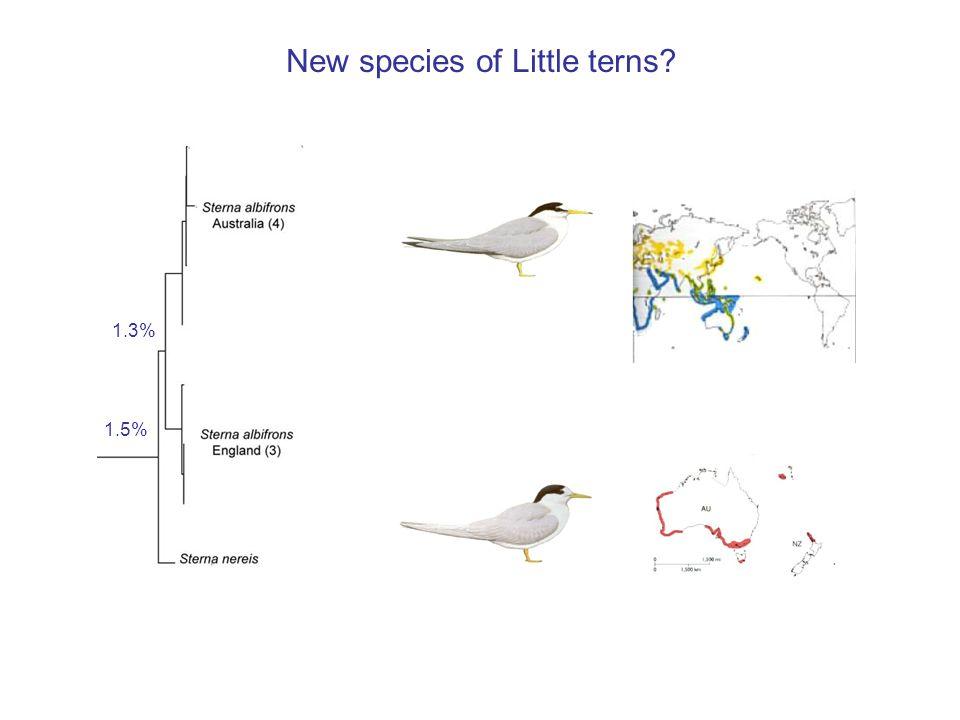 New species of Little terns? 1.5% 1.3%