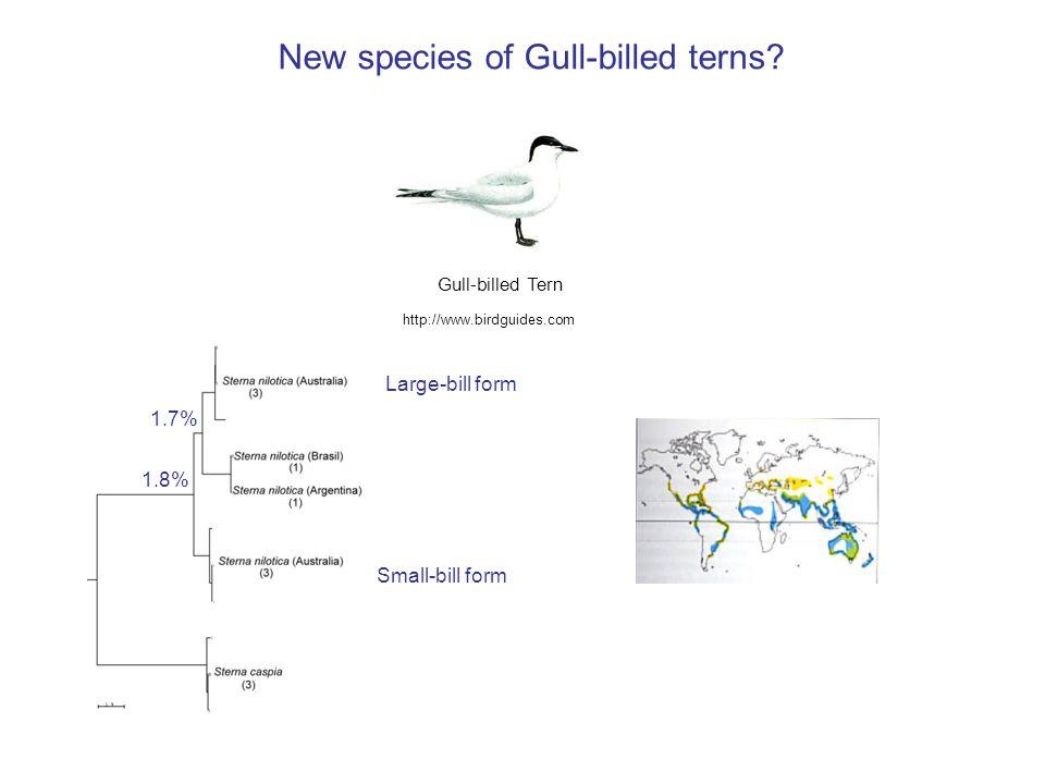 http://www.birdguides.com Large-bill form Small-bill form 1.7% 1.8% New species of Gull-billed terns.