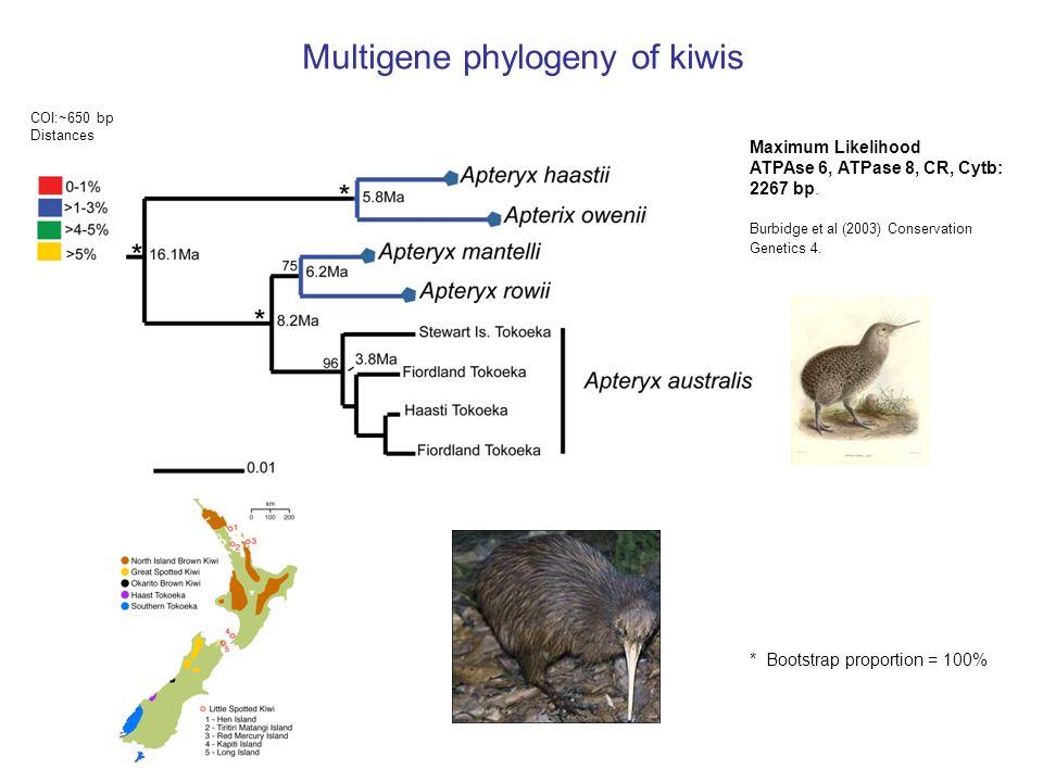 Multigene phylogeny of kiwis COI:~650 bp Distances Maximum Likelihood ATPAse 6, ATPase 8, CR, Cytb: 2267 bp.