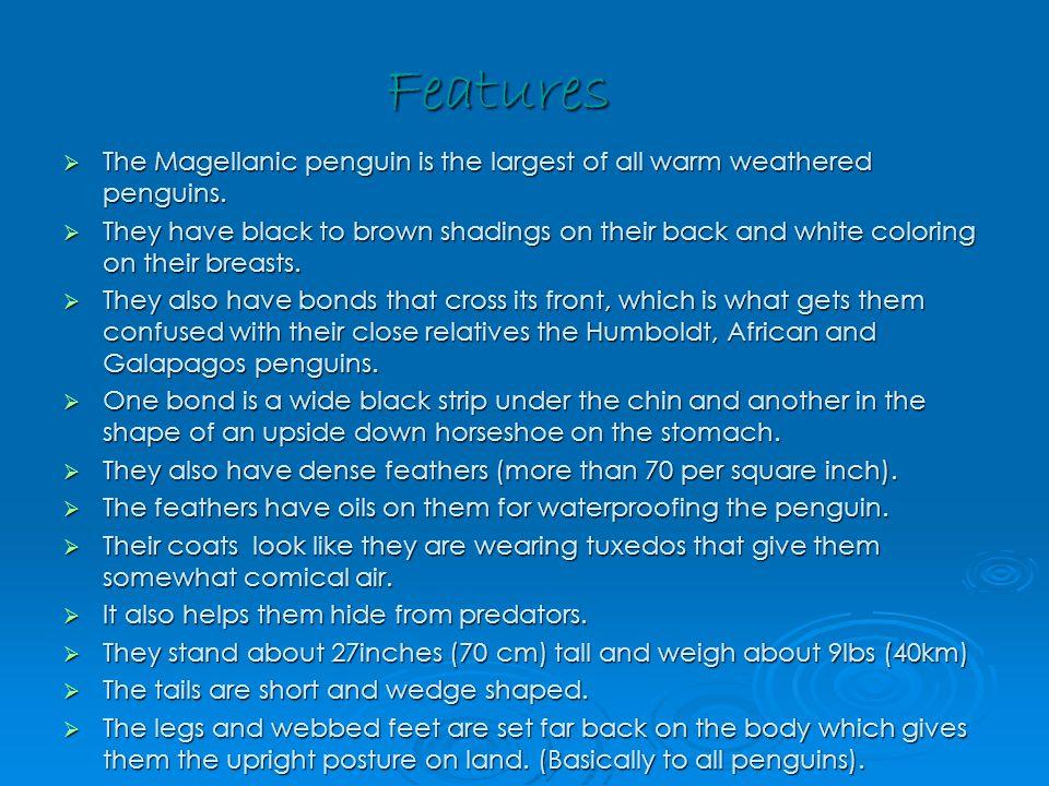 Penguin Tuxedos.