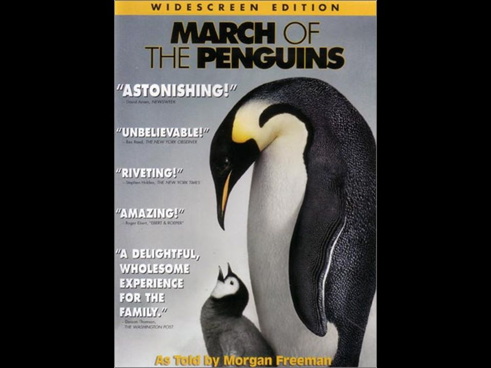 The March of the Penguins Used it for: Different styles of poetryDifferent styles of poetry Acrostic poemsAcrostic poems Non-fiction writingNon-fiction writing Making a fact book to read to reception childrenMaking a fact book to read to reception children