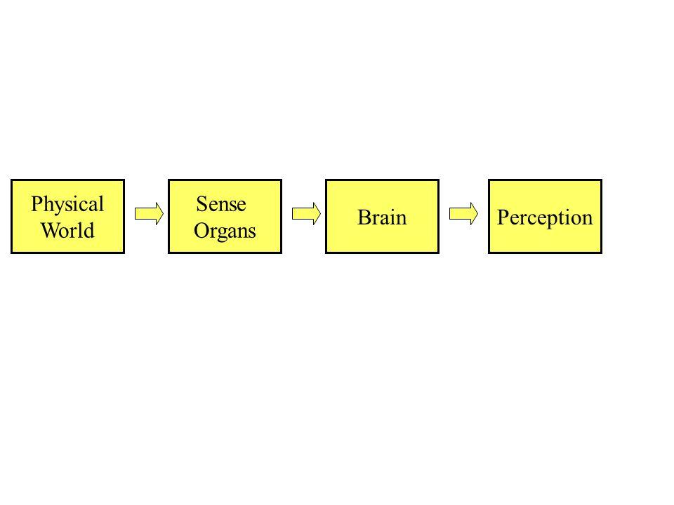 Physical World Sense Organs BrainPerception