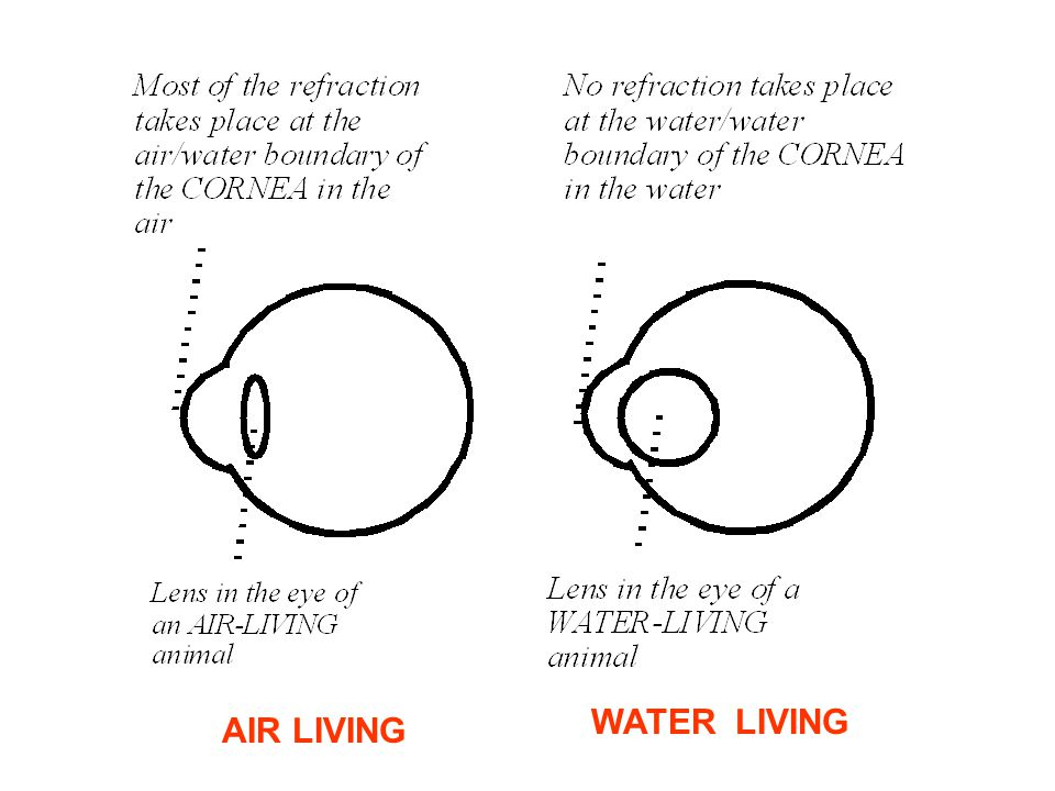 AIR LIVING WATER LIVING