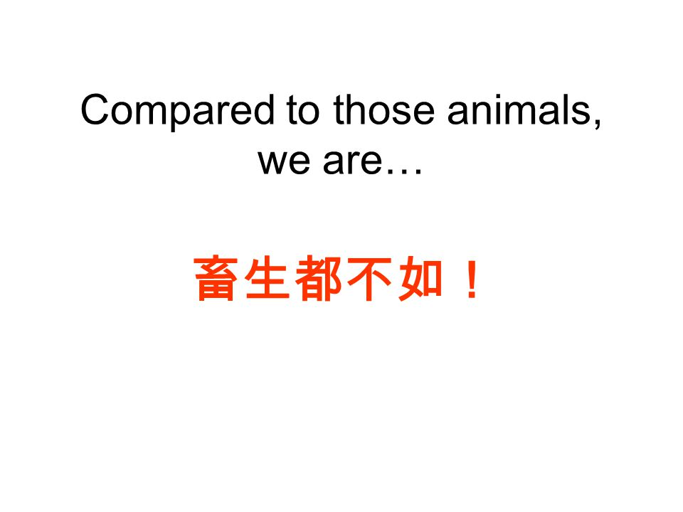 Compared to those animals, we are… 畜生都不如!