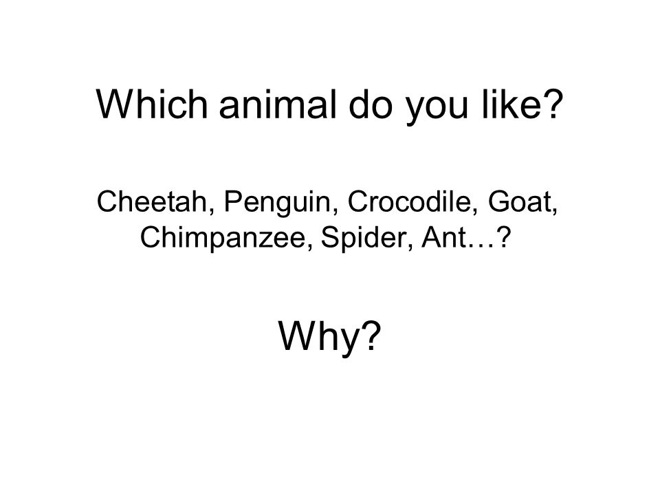 Which animal do you like Cheetah, Penguin, Crocodile, Goat, Chimpanzee, Spider, Ant… Why
