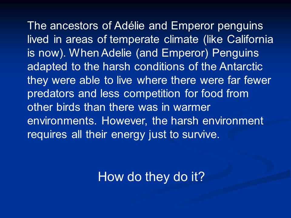 The ancestors of Adélie and Emperor penguins lived in areas of temperate climate (like California is now).