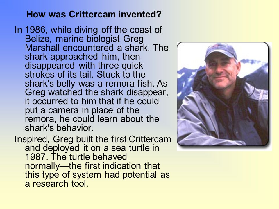 How was Crittercam invented? In 1986, while diving off the coast of Belize, marine biologist Greg Marshall encountered a shark. The shark approached h