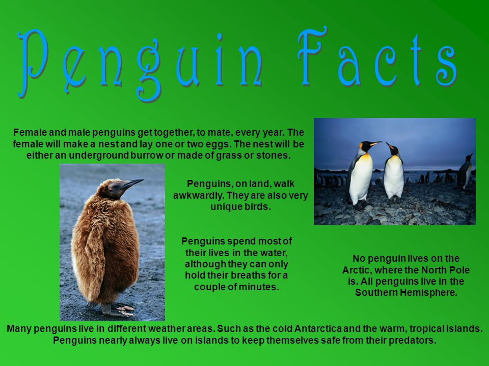 The largest penguin is the Emperor Penguin at 1 metre tall.