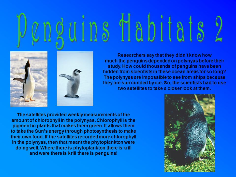 A.Food preferences and resources 1. Penguins eat krill, squids and fish.