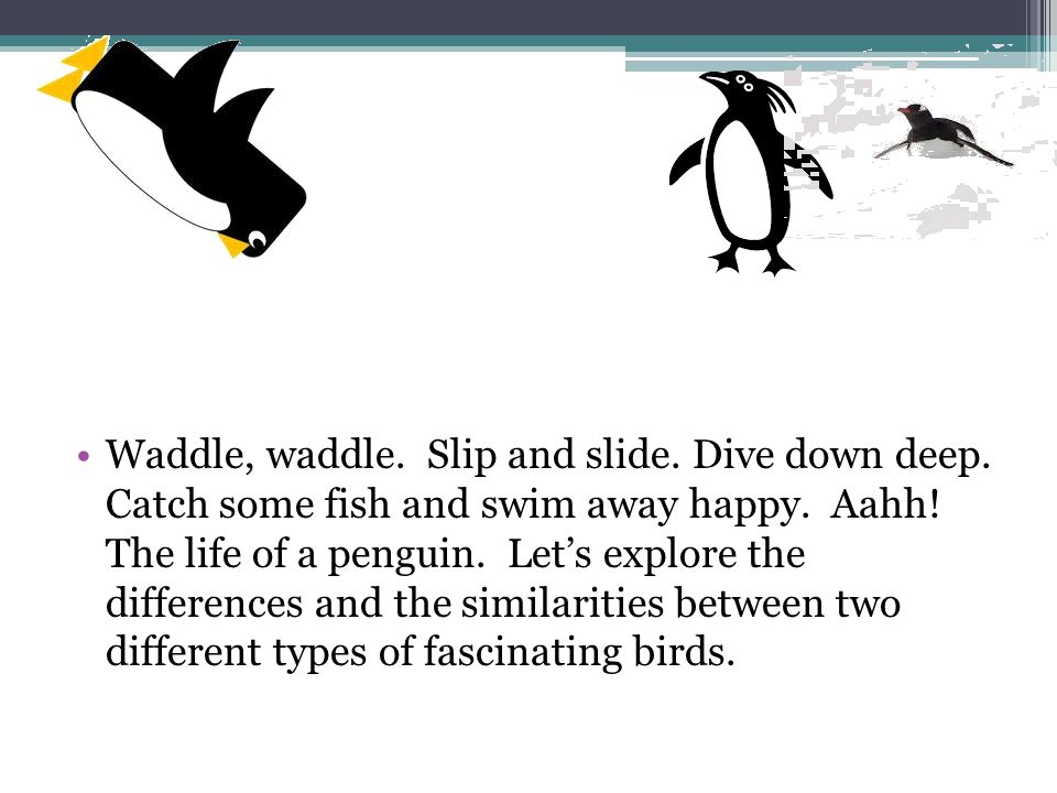 Waddle, waddle. Slip and slide. Dive down deep. Catch some fish and swim away happy.