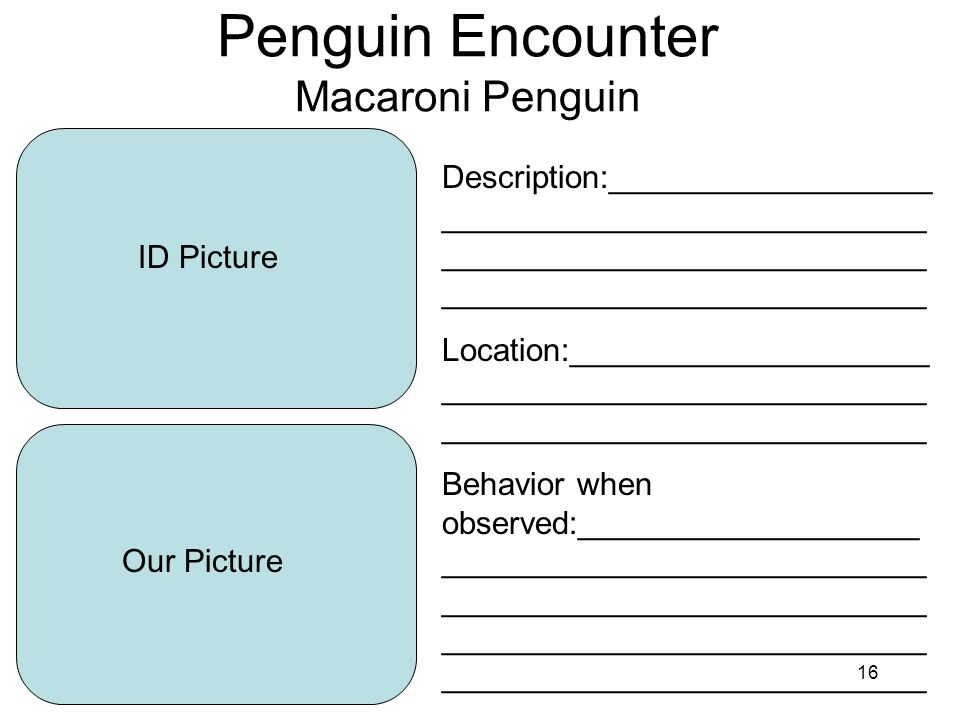 16 Penguin Encounter Macaroni Penguin ID Picture Our Picture Description:__________________ ___________________________ ___________________________ ___________________________ Location:____________________ ___________________________ ___________________________ Behavior when observed:___________________ ___________________________ ___________________________ ___________________________ ___________________________
