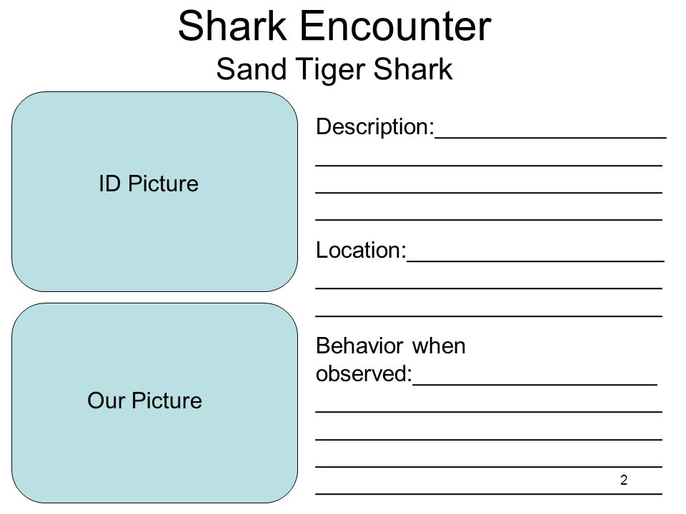 2 Shark Encounter Sand Tiger Shark ID Picture Our Picture Description:__________________ ___________________________ ___________________________ ___________________________ Location:____________________ ___________________________ ___________________________ Behavior when observed:___________________ ___________________________ ___________________________ ___________________________ ___________________________