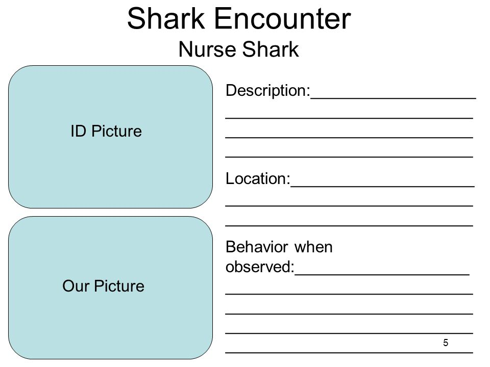 5 Shark Encounter Nurse Shark ID Picture Our Picture Description:__________________ ___________________________ ___________________________ ___________________________ Location:____________________ ___________________________ ___________________________ Behavior when observed:___________________ ___________________________ ___________________________ ___________________________ ___________________________