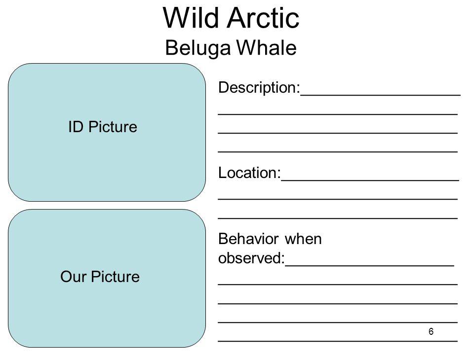 7 Wild Arctic Polar Bear ID Picture Our Picture Description:__________________ ___________________________ ___________________________ ___________________________ Location:____________________ ___________________________ ___________________________ Behavior when observed:___________________ ___________________________ ___________________________ ___________________________ ___________________________