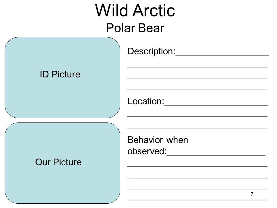 8 Wild Arctic Walrus ID Picture Our Picture Description:__________________ ___________________________ ___________________________ ___________________________ Location:____________________ ___________________________ ___________________________ Behavior when observed:___________________ ___________________________ ___________________________ ___________________________ ___________________________