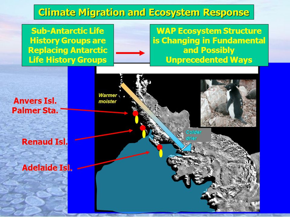 Climate Migration and Ecosystem Response mmmmmm Adelaide Isl. Renaud Isl. Anvers Isl. Palmer Sta. WAP Ecosystem Structure is Changing in Fundamental a