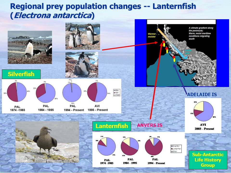 Regional prey population changes -- Lanternfish (Electrona antarctica) ADELAIDE IS Silverfish ANVERS IS Sub-Antarctic Life History Group Lanternfish