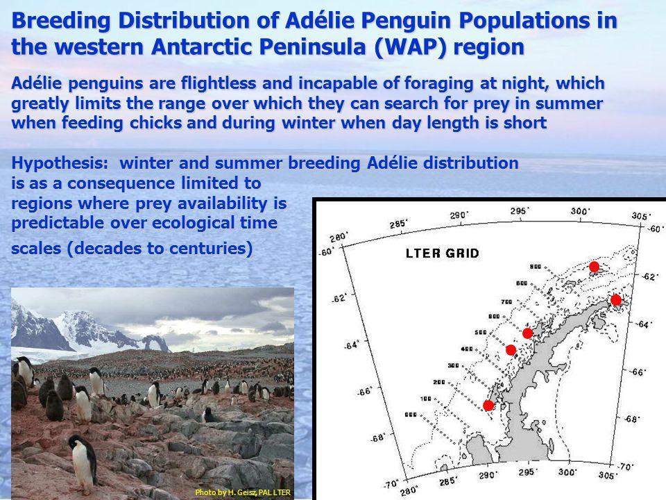 Breeding Distribution of Adélie Penguin Populations in the western Antarctic Peninsula (WAP) region Adélie penguins are flightless and incapable of fo