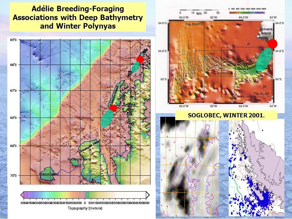 Adélie Breeding-Foraging Associations with Deep Bathymetry and Winter Polynyas SOGLOBEC, WINTER 2001.