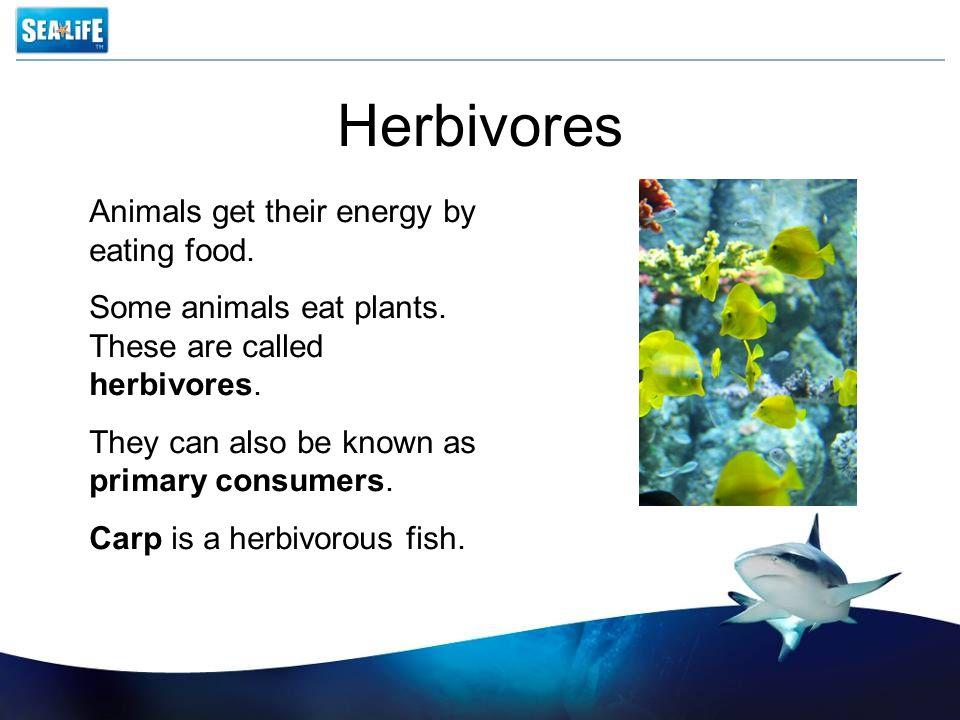 Food chain 4 The sunZooplanktonPhytoplankton MackerelSeal Shark