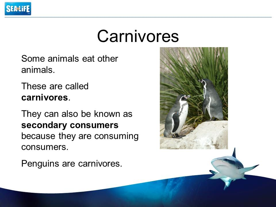 Carnivores Some animals eat other animals. These are called carnivores. They can also be known as secondary consumers because they are consuming consu