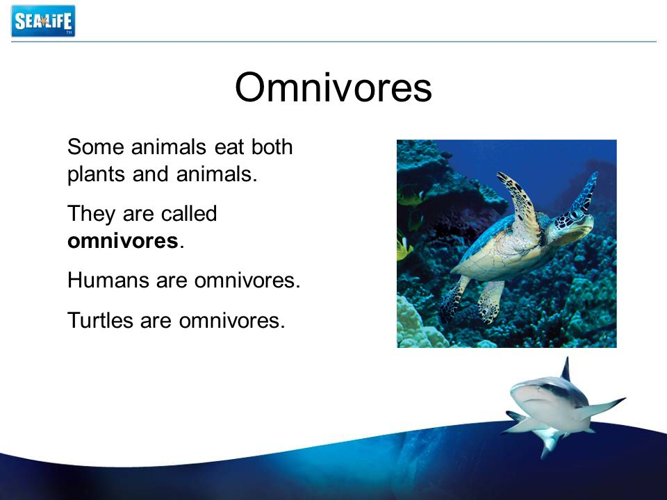 Omnivores Some animals eat both plants and animals. They are called omnivores. Humans are omnivores. Turtles are omnivores.