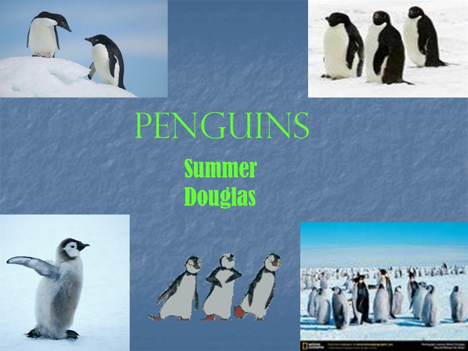 Penguins Summer Douglas