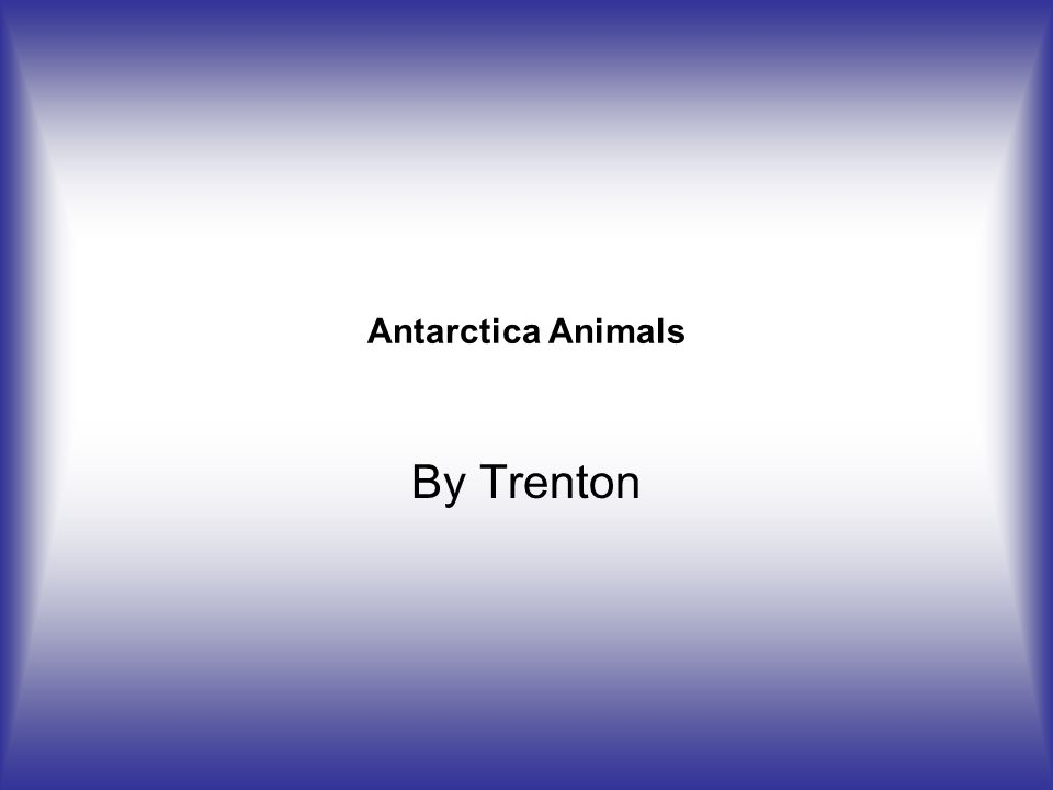 Antarctica Animals By Trenton
