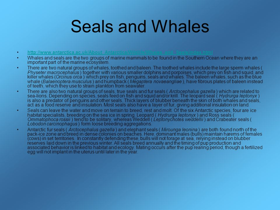 Seals and Whales http://www.antarctica.ac.uk/About_Antarctica/Wildlife/Whales_and_Seals/index.html Whales and seals are the two groups of marine mammals to be found in the Southern Ocean where they are an important part of the marine ecosystem.
